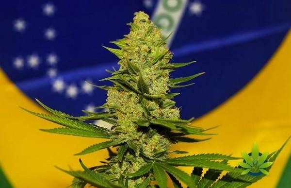 Grossistes CBD
